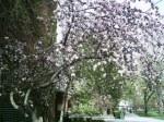 spring2006_11