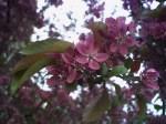 spring2006_3