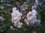spring2006_4