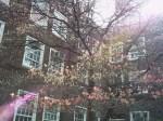 spring2006_6